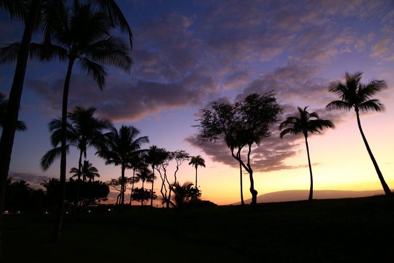 palm-tree-754630_1280