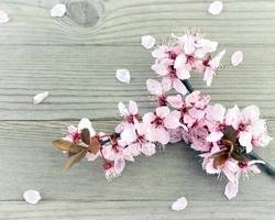 ネイリスト必見!春の展示会はインスピレーションの源