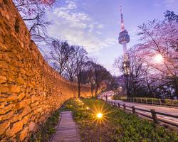 今年もいよいよ桜シーズン間近!東京夜桜おススメスポット。
