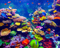 ネイルデザイン集めとしても、避暑スポットとしてもおススメの水族館巡り!!