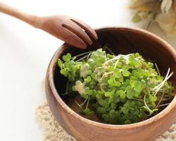ブロッコリースプラウトの食べ方とは?摂取できる栄養素は?
